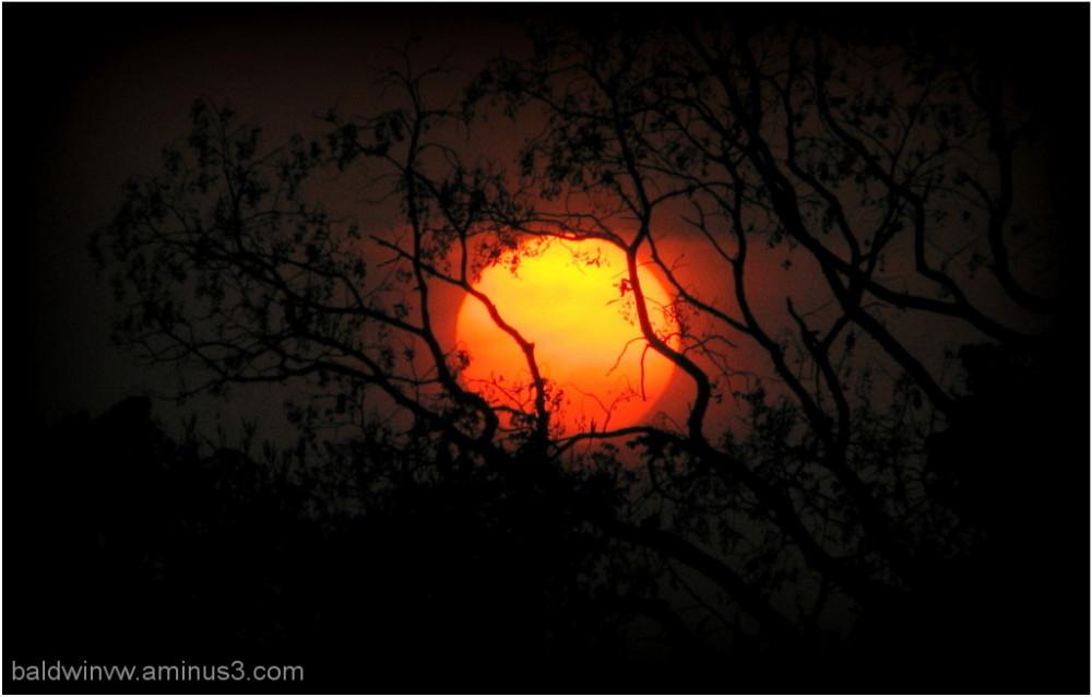Orange tree ...