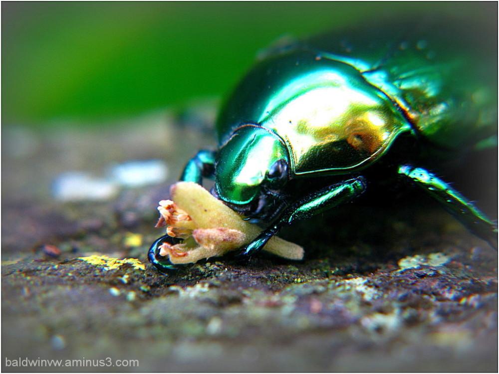Green glow  ...