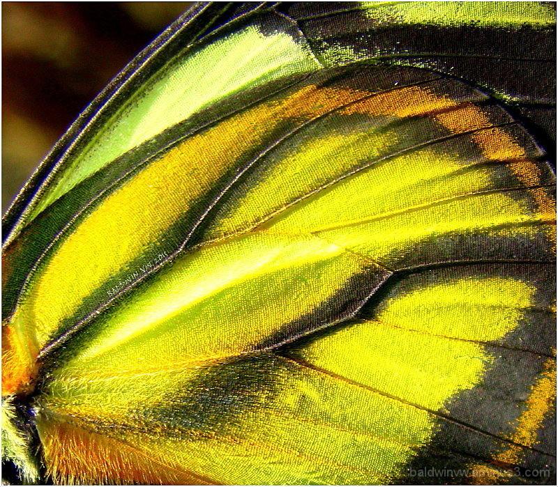 Nature's masterpiece ...