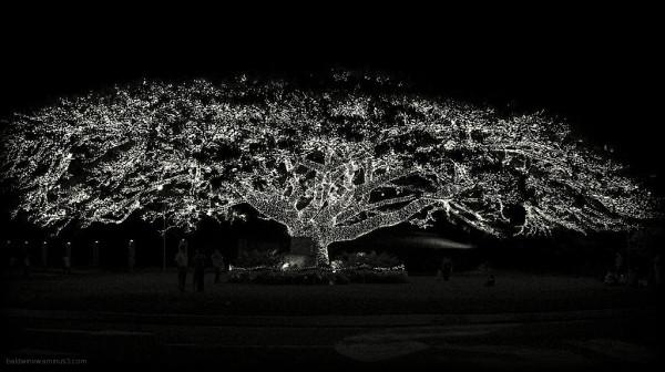 Tree of lights ...