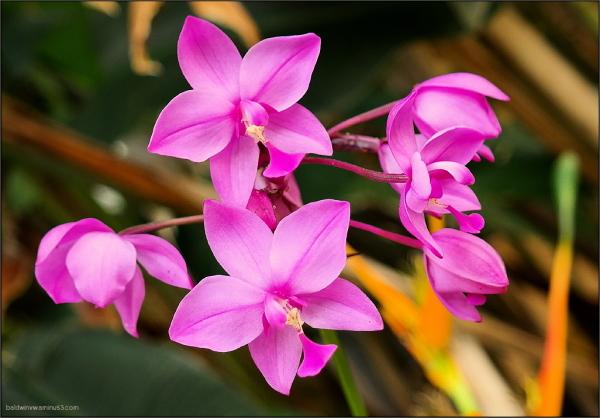Orchids ...