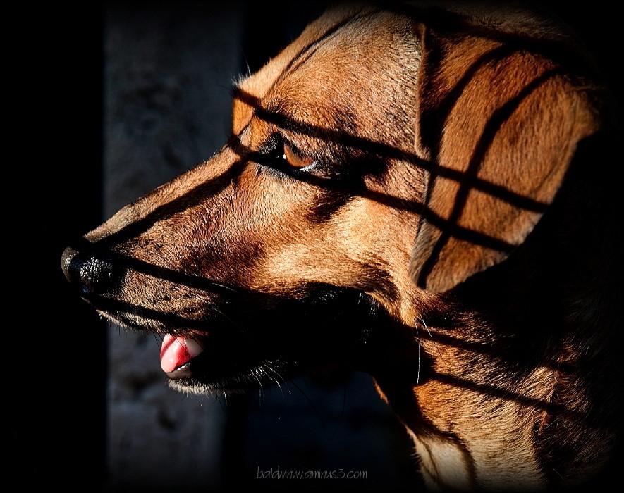 The masked vigilant ...