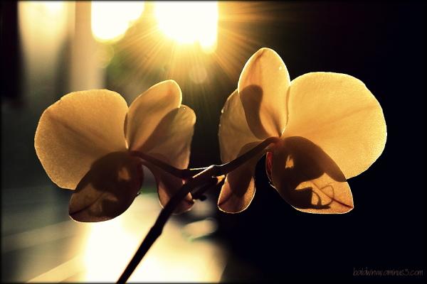 Facing the light ...