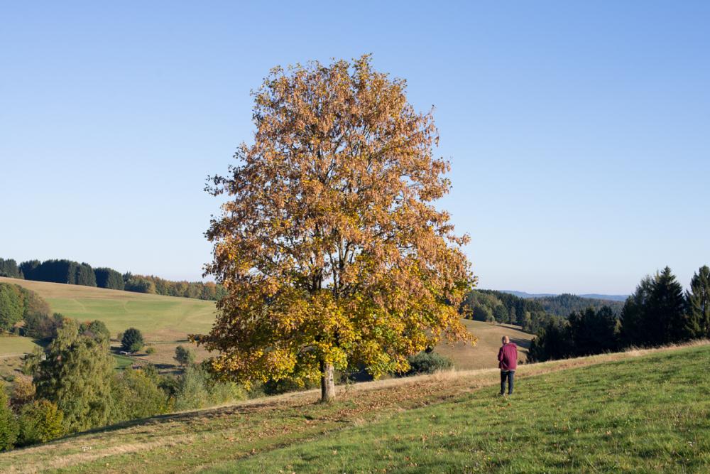 Treefashion