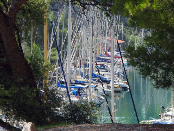 Spying  boats from the forest