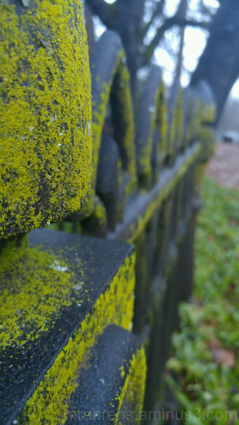Old Cemetery Plot