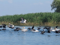 Panic in The Danube Delta
