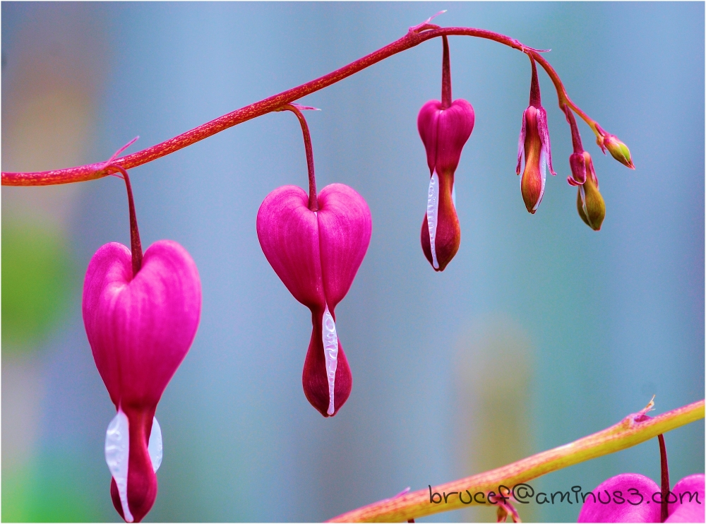Hearts hung out awaiting true love