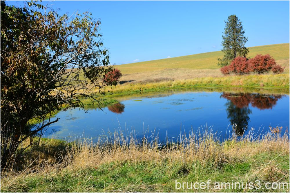 Pond on a Idaho Farm