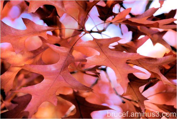 Oak leafs from last fall