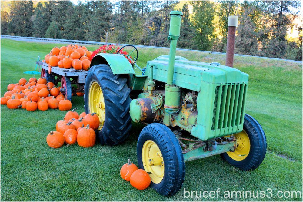 Bringing in the Pumpkin havest