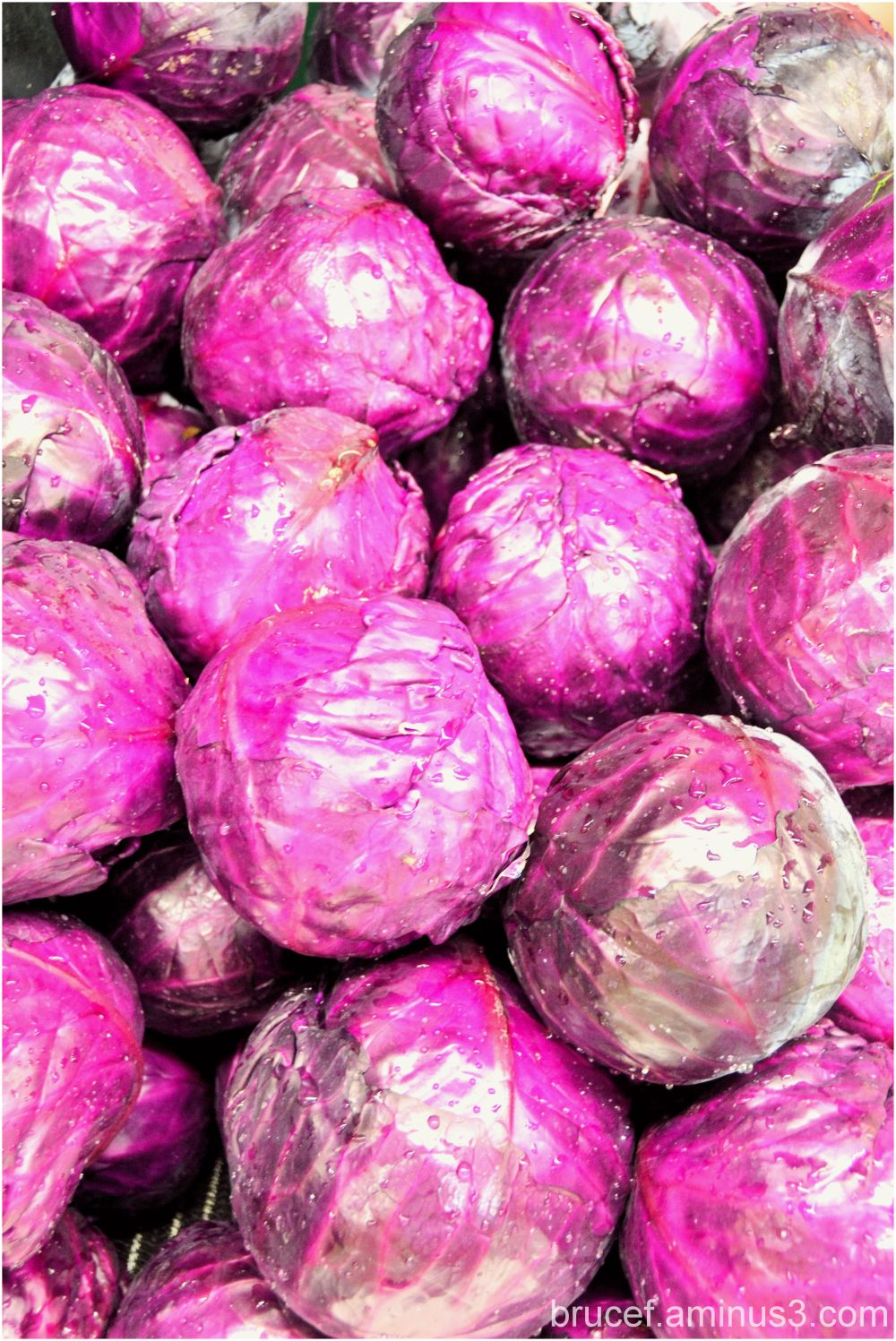 Purple and Red Cabbage