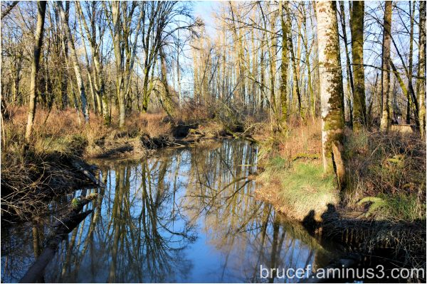 Reflections at Nisqually Delta