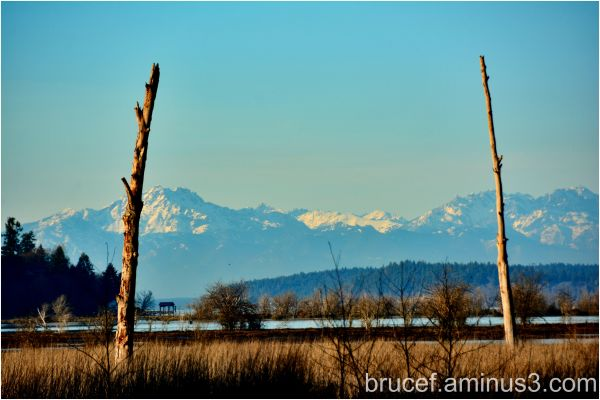 Olympic Mountains looking over Nisqually Delta