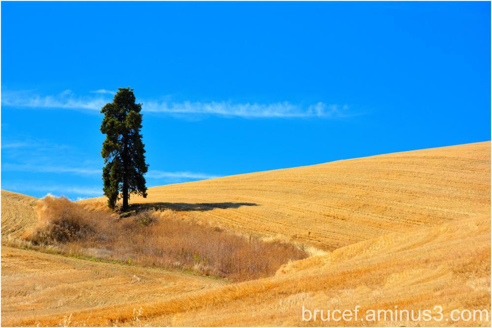 Palouse Farmland Sentry