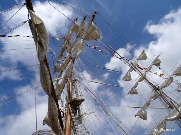 tall ships race antwerp 4