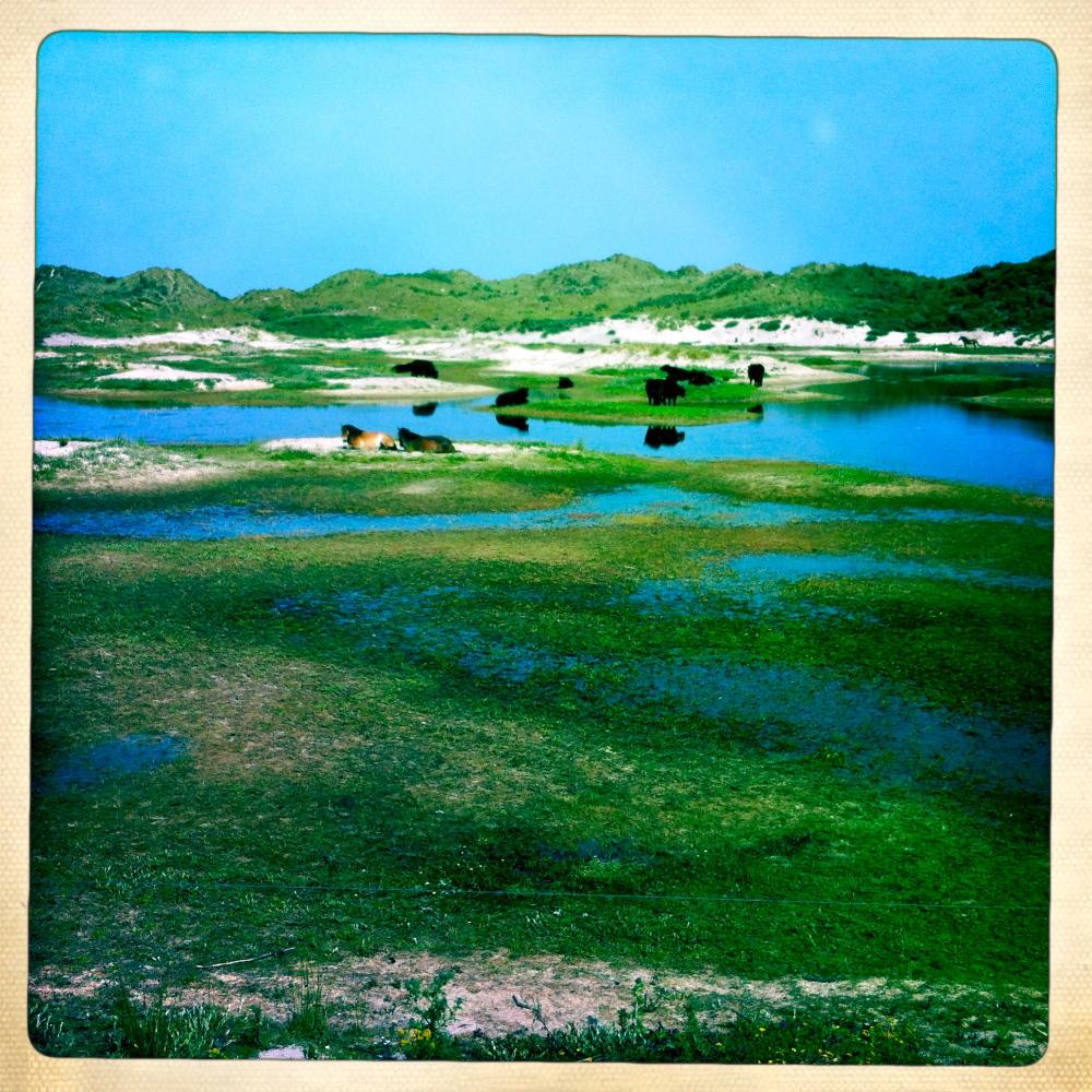 vee eiland cattle island