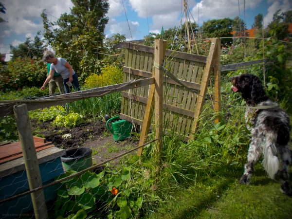 volkstuin hond dog allotment garden community