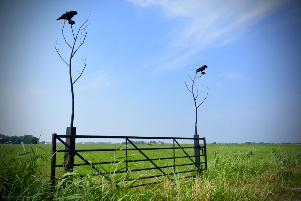 crows kraaien stuffed slachtedyk