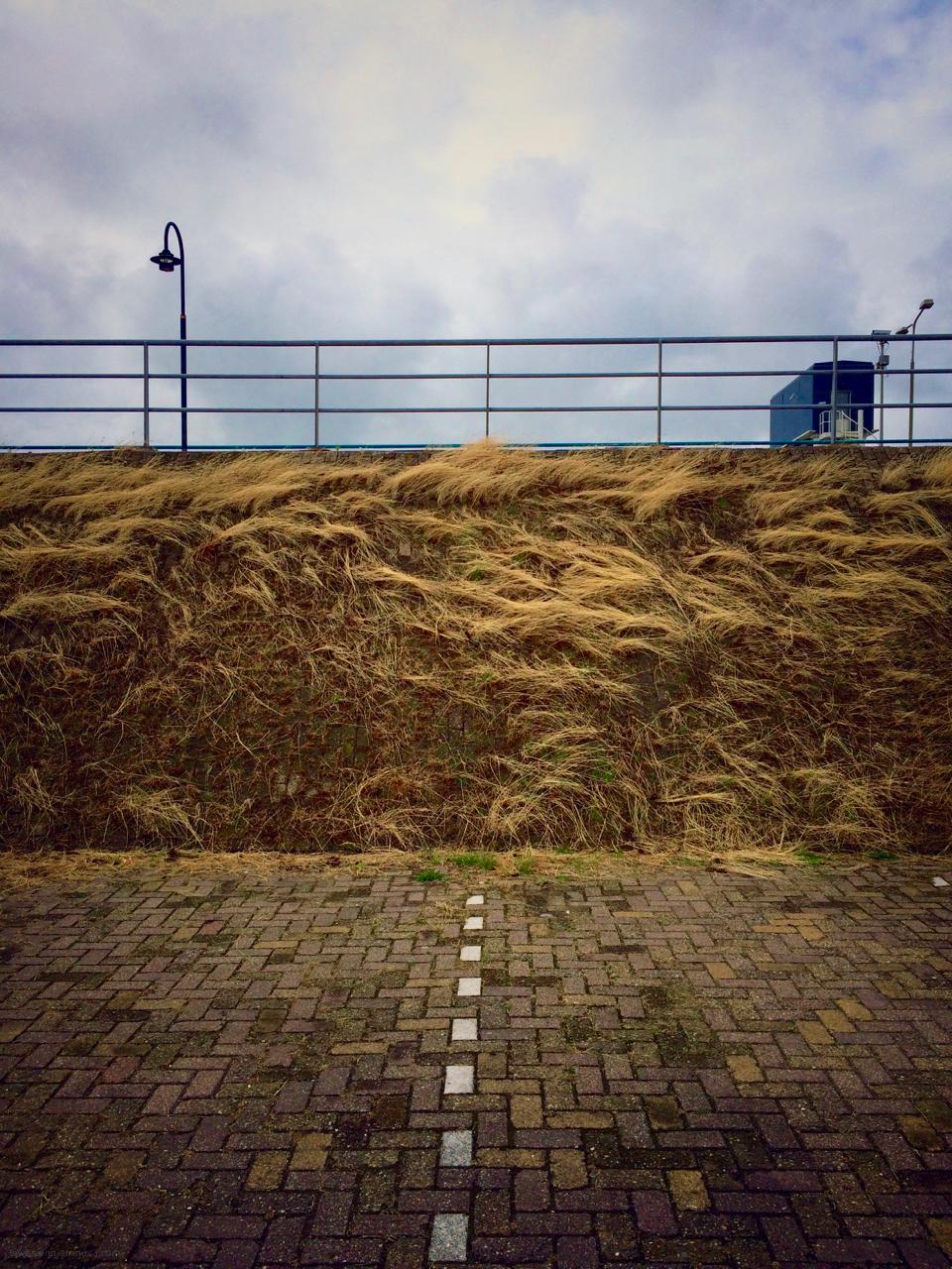 grass parking lot
