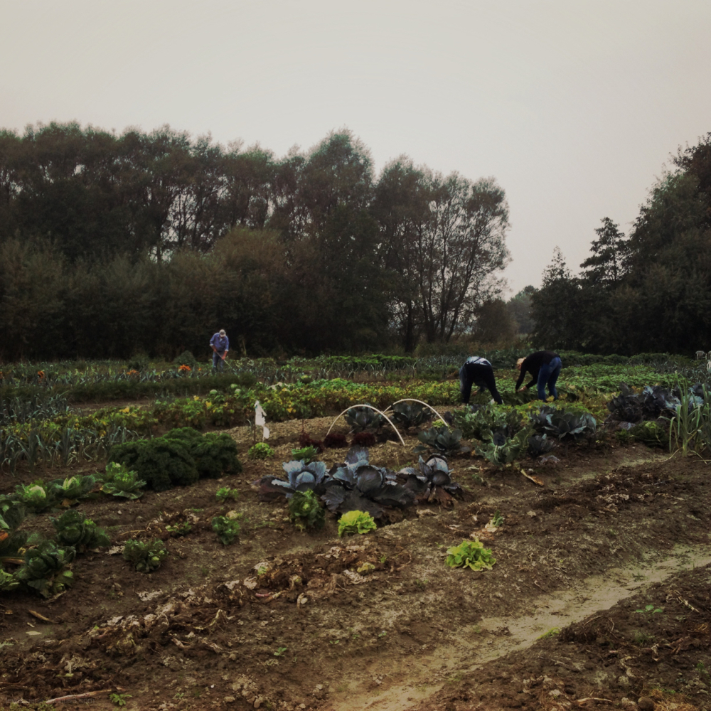 community garden allotment volkstuin