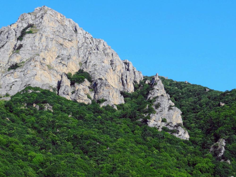 Forest peak