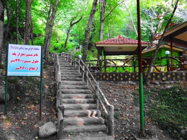forest staircase amol mazandaran iran