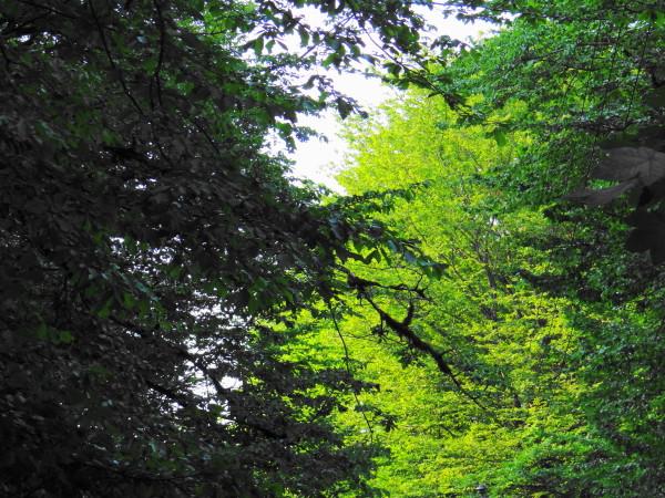 forest green ramsar mazandaran iran