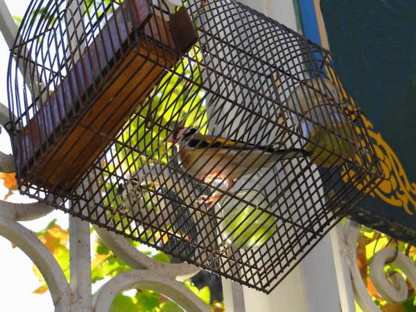 Nightingale bird cage