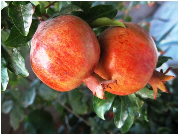 Lucky Pomegranates!