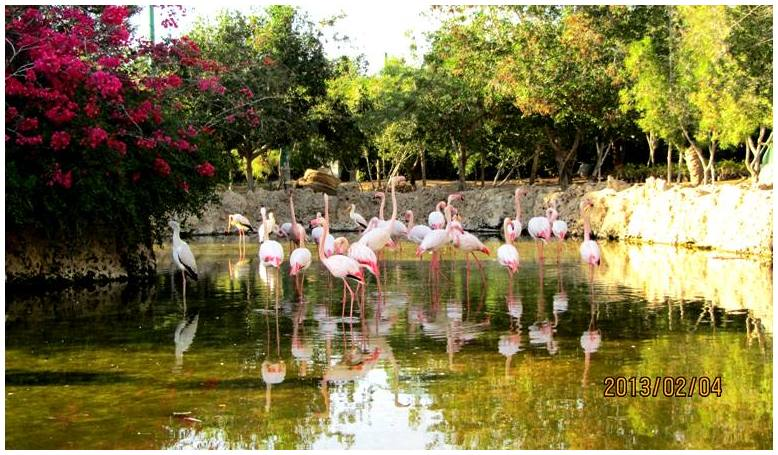lovely Flamingos. 2