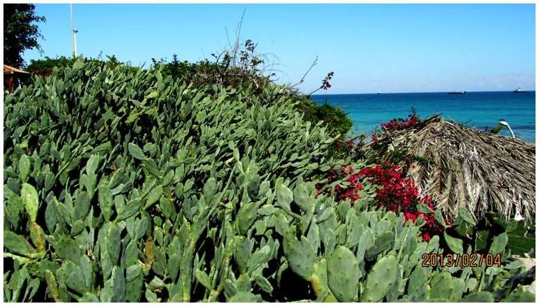 Cactus .1