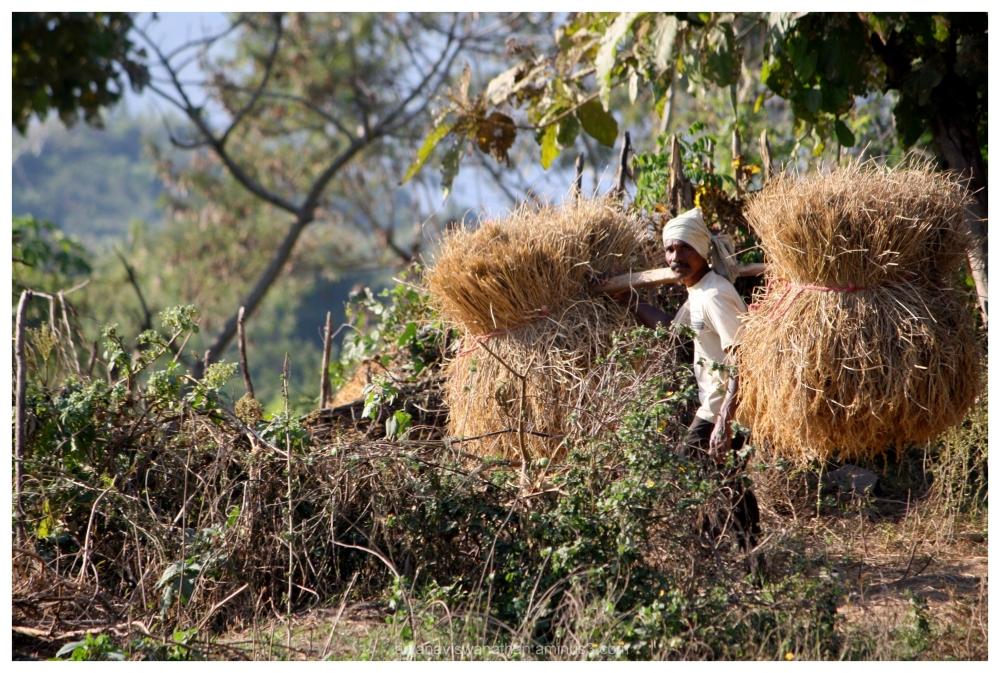 farmer odisha india