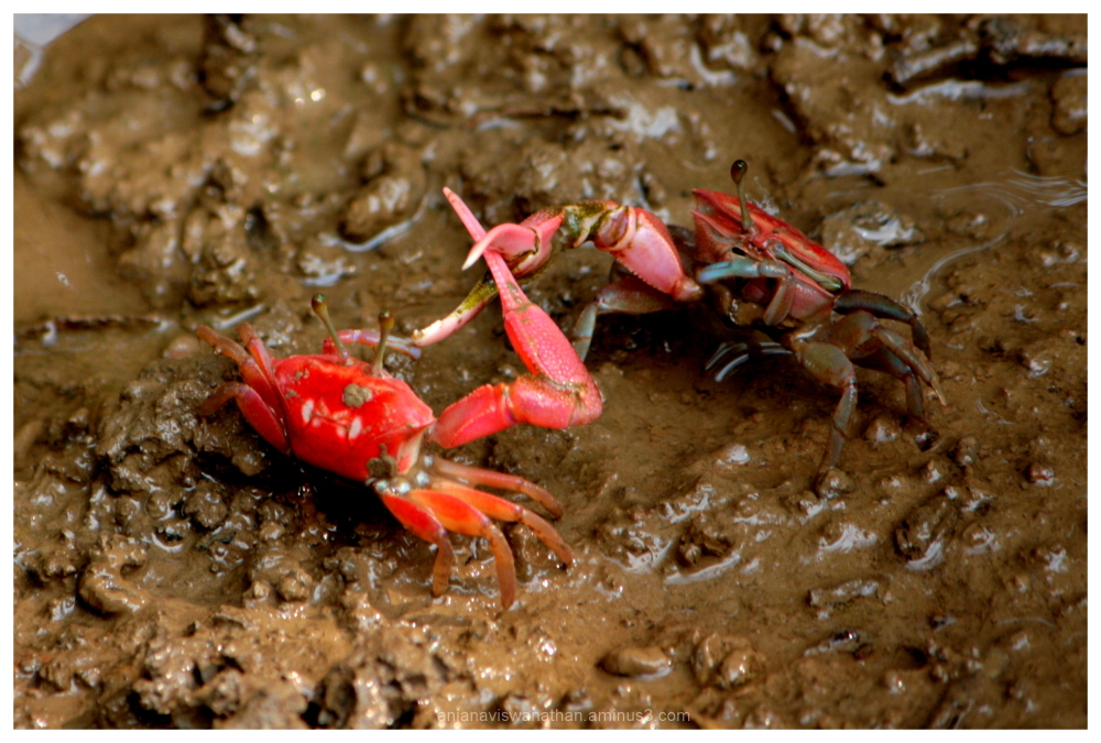 Crustaceans