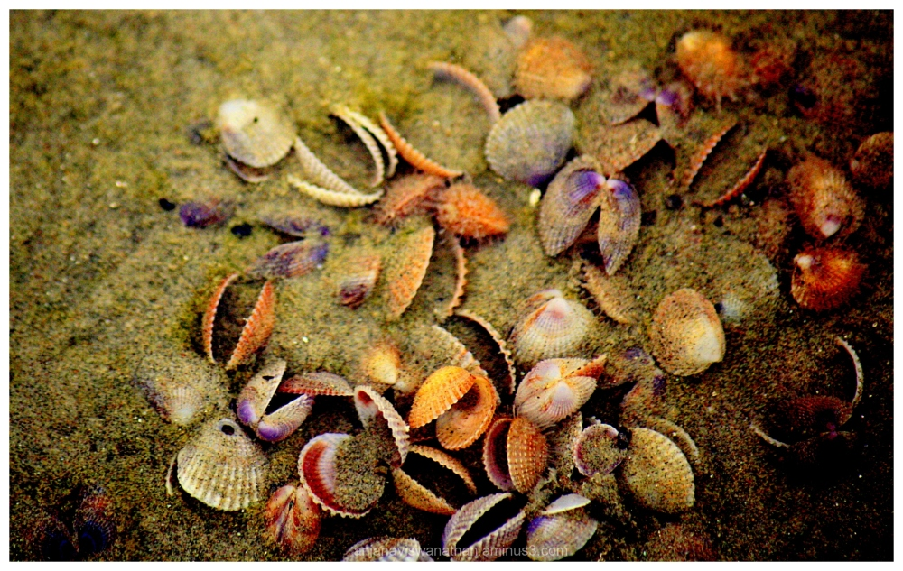 mollusks molluscs