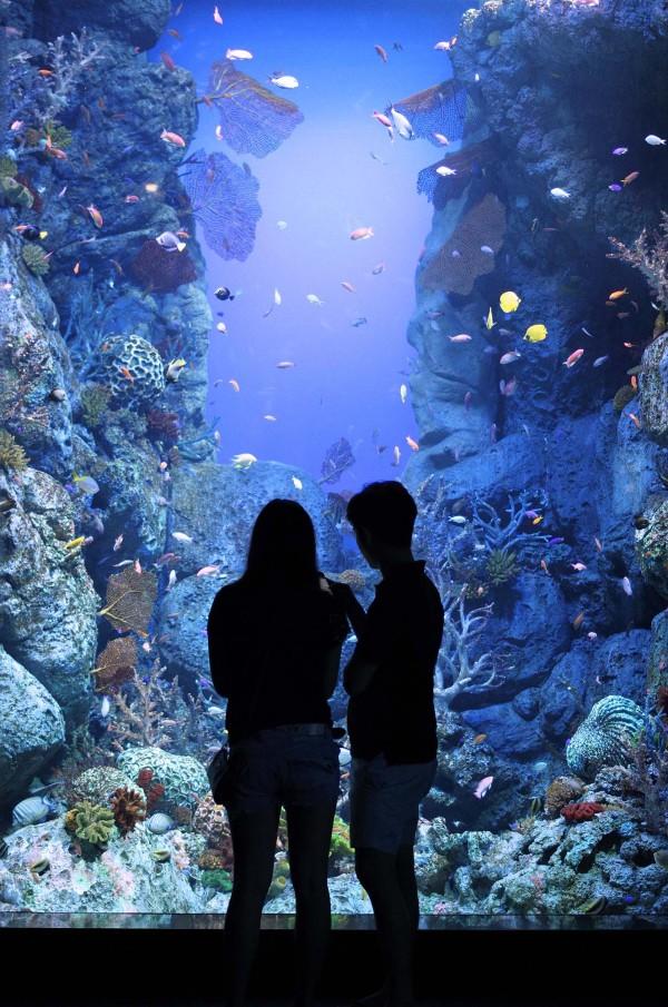 Silhouette, aquarium