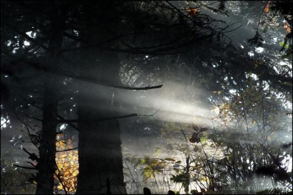 lumière en sous-bois