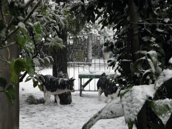 Nieve en Tres Arroyos 11/12