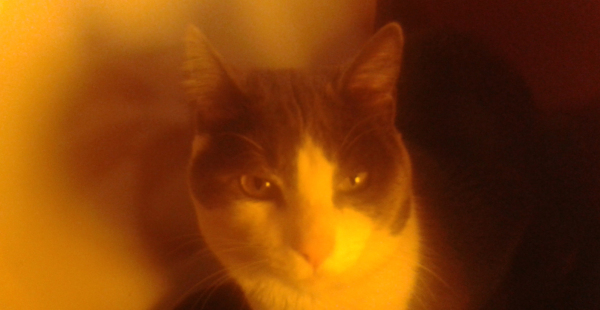 A mi gato le gusta posar