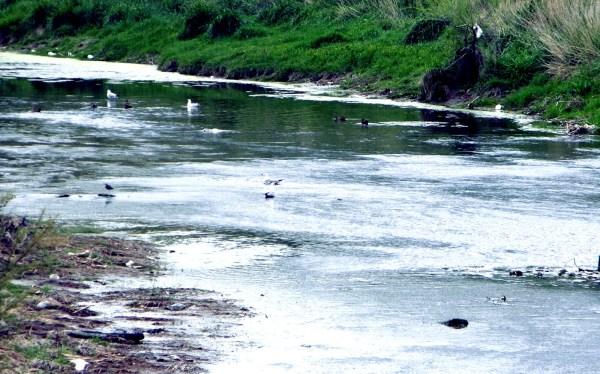 Arroyo del Medio X