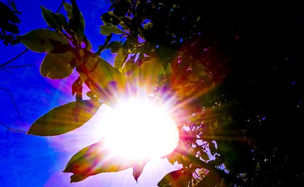 Vida Solar