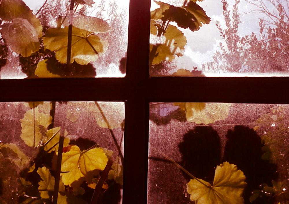 A través del vidrio de la ventana 2/4