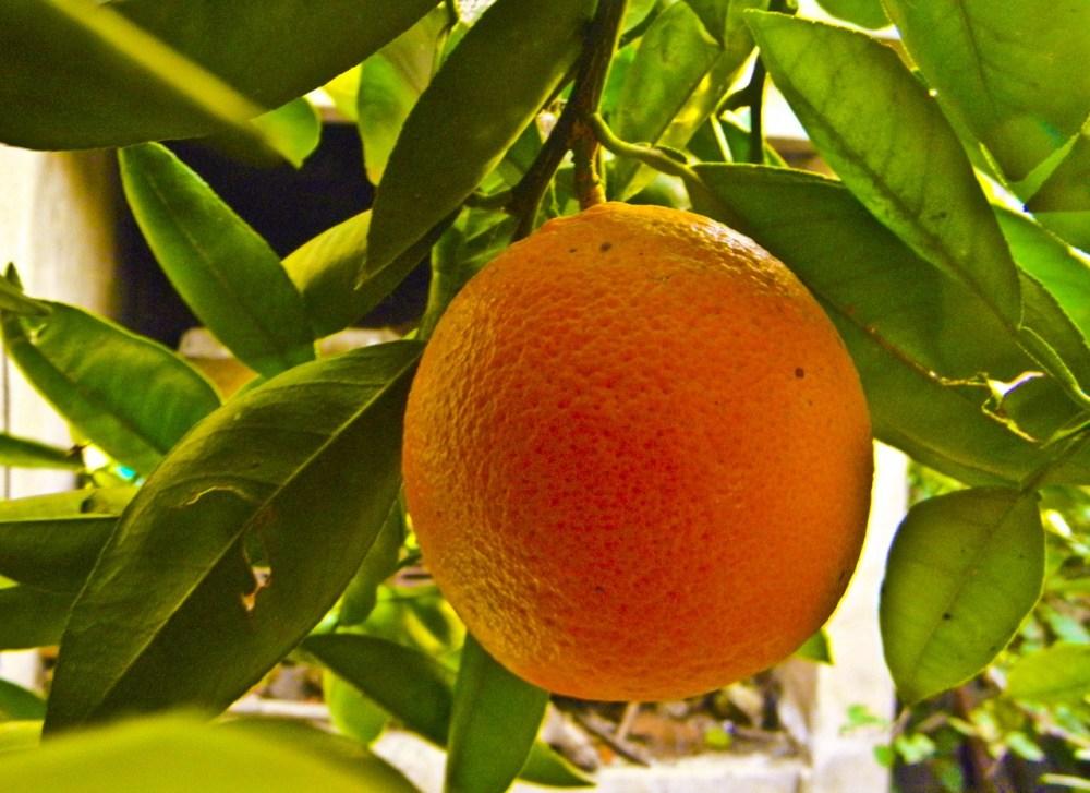 Naranja de mi jardín