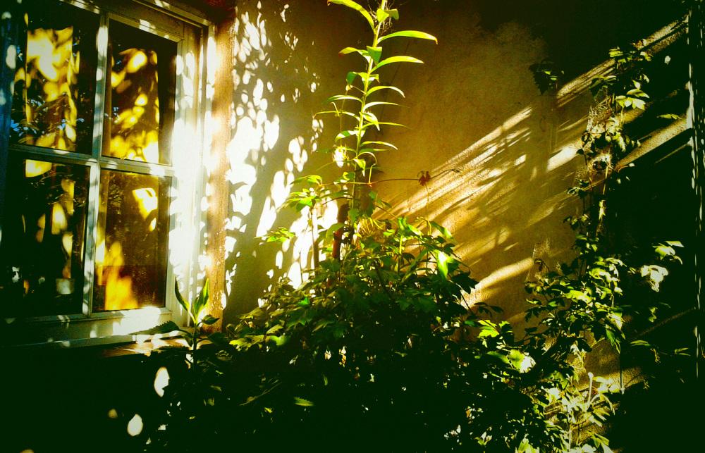 Reflejos y sombras