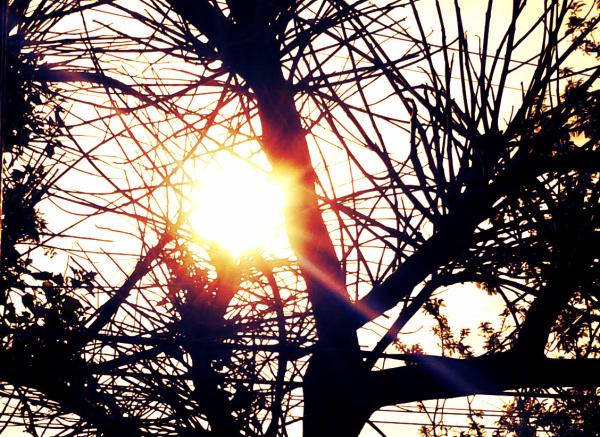 Sol entre ramas
