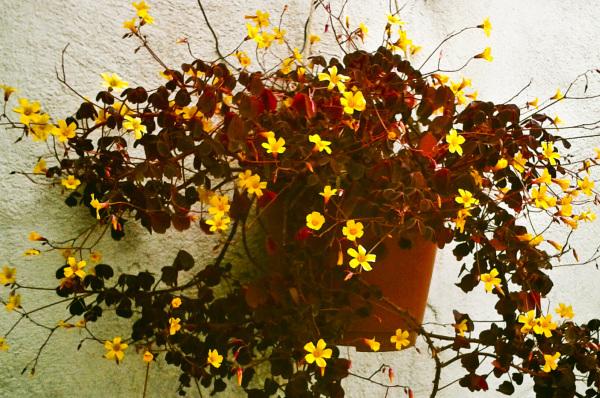Primavera en el jardín 5 - 6