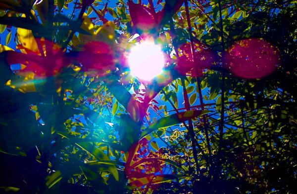 Fantasía Solar 1 - 5