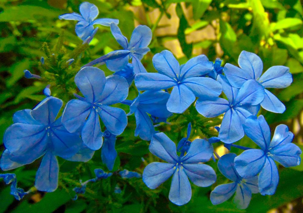 Flores 5 - 5