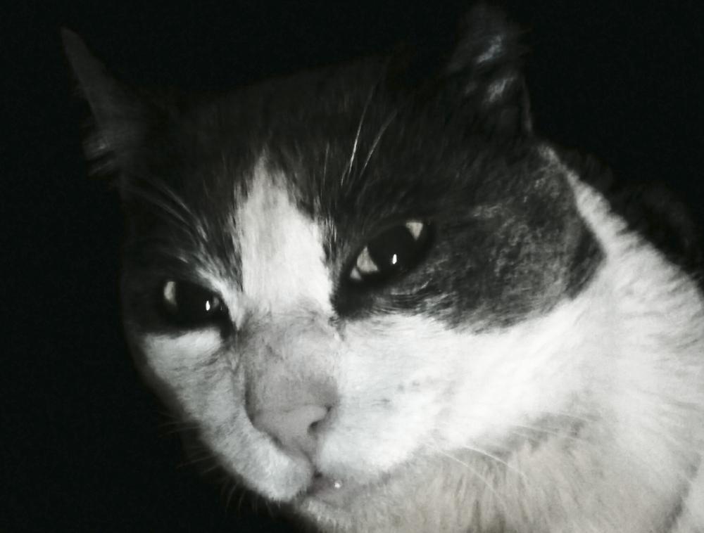 Mi gato Chichilo