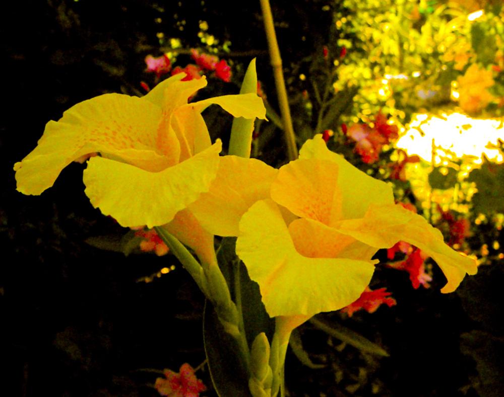 Vista floral